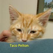 Taco Pelton.jpg