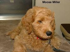 Moose Miller.jpg
