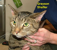 grayson Shaffer.jpg