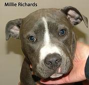 Millie Richards.jpg