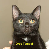 Oreo Tempel.jpg