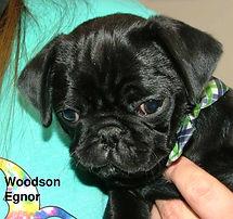 Woodson Egnor.jpg