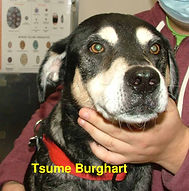 Tsume Burghart.jpg