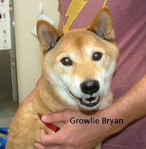 Growlie Bryan.jpg