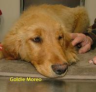 Goldie Moreo.jpg