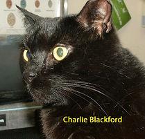 Charlie Blackford.jpg