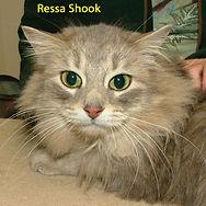 Ressa Shook.jpg