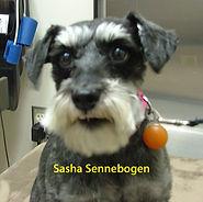 Sasha Sennebogen.jpg