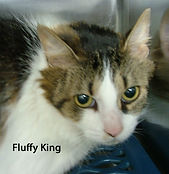 Fluffy King.jpg