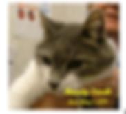Screen Shot 2020-04-04 at 9.13.26 PM.png