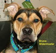 Bruno Widnehoefer.jpg