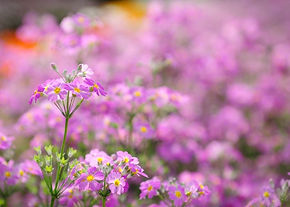 Fall Flowers Baby Shower Invitation (1).