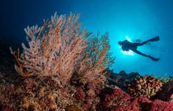 20160810_coral_reef_00017_by_uli_kunz