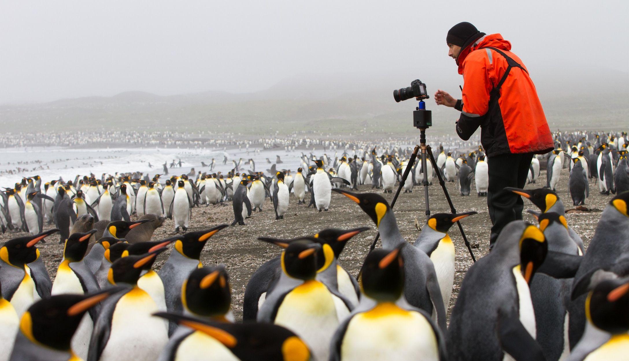 uli_kunz_penguins_richard_sidey