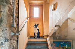 Industrial staircase leading to the garden and the lovely Woody