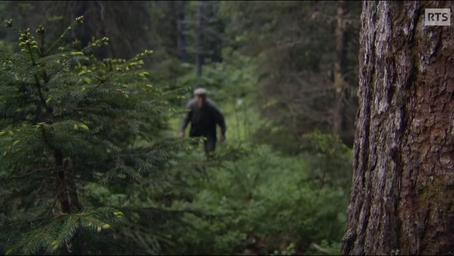 Le cueilleur d'arbres ...gardien du temple