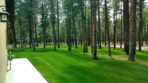 Hydroseeding grass by Lupine Lawn Care