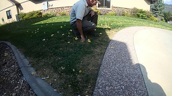 Turf Lawn evaluation consultation in Durango, CO by Lupine Lawn Care professionals.