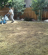 Overseeding or hydroseeding, Lupine Lawn Care can assist in making your lawn beautiful.