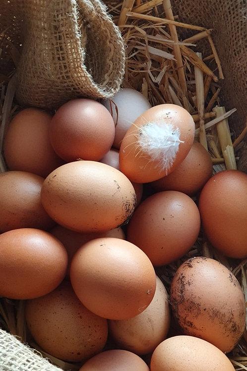 6x Our Free Range Eggs