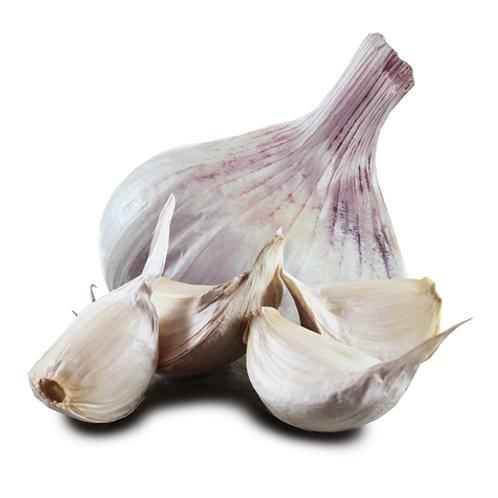 Iberian Wight Large Bulb