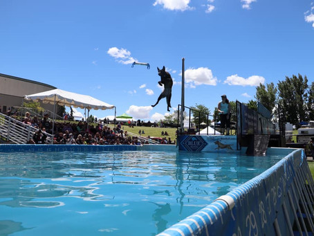 Dock Diving- More than just a dog sport