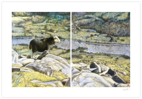 Sheep on a Fell (Diptych)