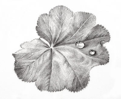 "The work ""Leaf with Dew"""