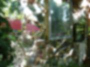 picassietteP1250528.JPG