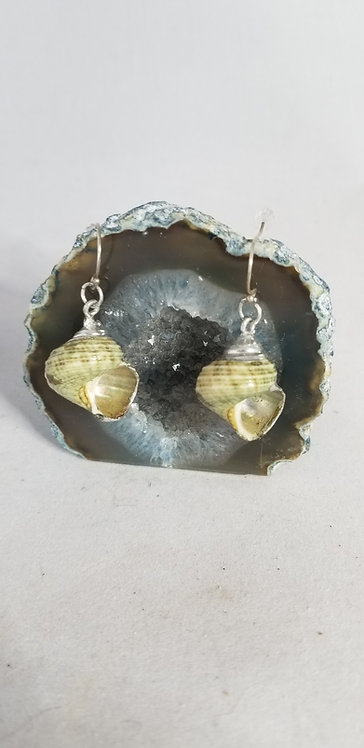 Silvered Shell Earring