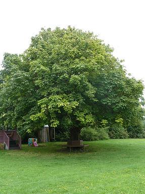 Memorial Chestnut Tree on Clapham Recreation Ground, West Sussex