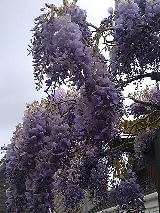 Blossom CT.JPG