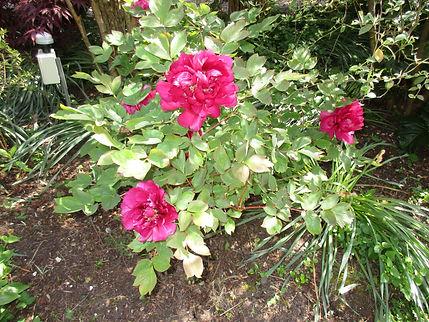 Blossom Kath H.JPG
