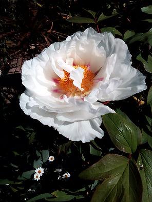 Blossom SM.jpg