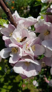 Blossom Jeff K.jpg