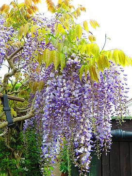 Blossoms 2 - David L.JPG