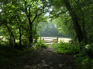 Footpath in Clapham Woods wih gate leading to sunlit field