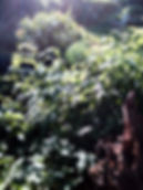 Green Sally M.jpg