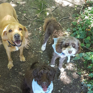 Dogboarding Sevenoaks