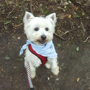 Dog boarding Tonbridge
