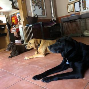 Dog boarding Eynsford