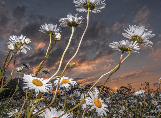 Dramatic Flowerscapes
