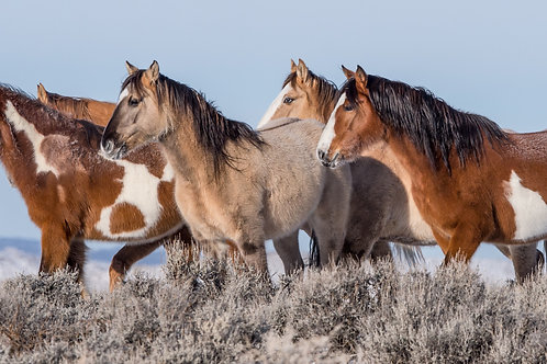 FOUR MUSTANG GENERATIONS