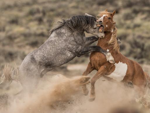 Spirit Of The Wild West