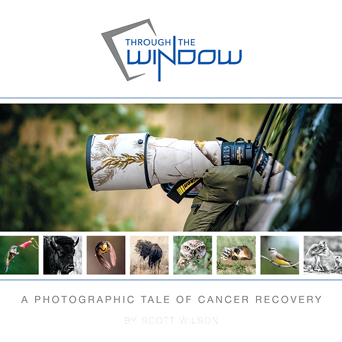 THROUGH THE WINDOW - A Photographic Tale of Cancer Recovery