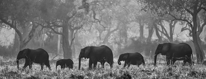 ELEPHANTS CROSSING