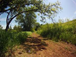 Pasture Trails