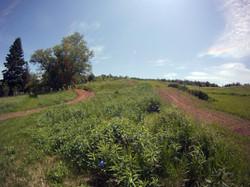 Lower Trails