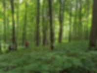 ForestAug18c.jpg