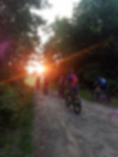 ForestAug18a.jpg